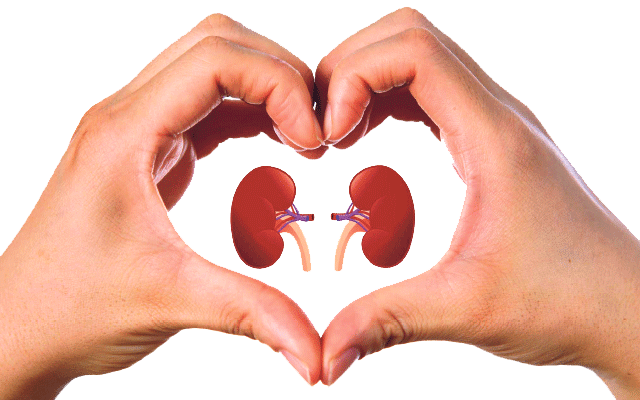 our hard working kidneys